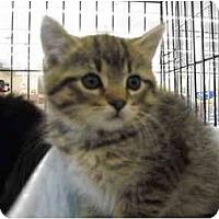 Adopt A Pet :: Hunni - Riverside, RI
