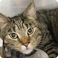 Adopt A Pet :: Ken (foster care) - Philadelphia, PA