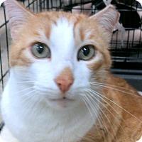 Adopt A Pet :: Rusty - Madisonville, LA