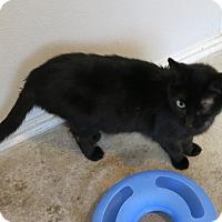 Adopt A Pet :: Paulette - Geneseo, IL