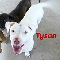 Adopt A Pet :: Tyson - San Antonio, TX