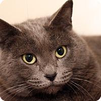 Adopt A Pet :: TINK - Royal Oak, MI