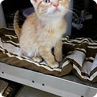 Adopt A Pet :: Licine - Chippewa Falls, WI