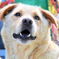 Adopt A Pet :: Alyssa  $20 - Lincolnton, NC