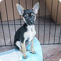 Adopt A Pet :: Butch - San Marcos, CA