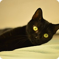 Adopt A Pet :: Raven - Beacon, NY