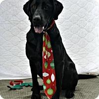 Adopt A Pet :: Vadar - Yreka, CA