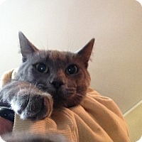 Adopt A Pet :: Huey - Bloomington, MN