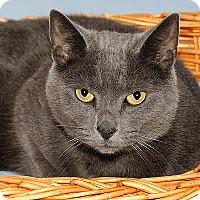 Adopt A Pet :: Dusty - Gatineau, QC