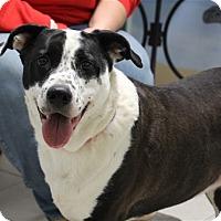 Adopt A Pet :: Sasha - Elyria, OH