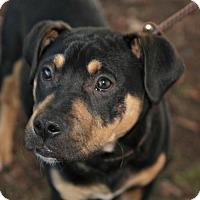 Adopt A Pet :: Otto - Sunnyvale, CA
