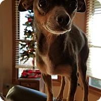 Adopt A Pet :: Mr. Chips - Sheridan, IL