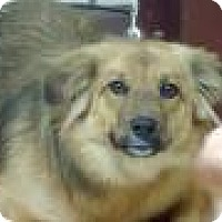Adopt A Pet :: Shelby - Gridley, CA