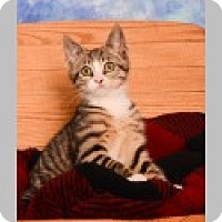 Adopt A Pet :: Milo - Pittsboro, NC