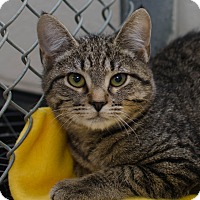 Adopt A Pet :: Boo - Greenwood, SC