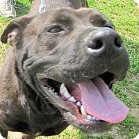 Adopt A Pet :: ADOPTED!  Harley Davidson - Charleston, AR