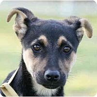 Adopt A Pet :: Missy-URGENT - kennebunkport, ME