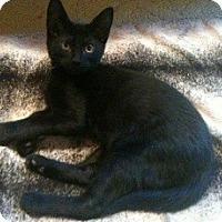 Adopt A Pet :: Gaspar - Denton, TX