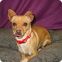 Adopt A Pet :: Dezzi - Reno, NV