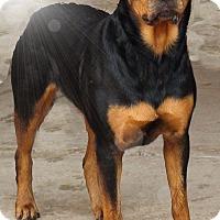 Adopt A Pet :: Nakita - Gilbert, AZ