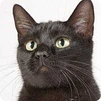 Adopt A Pet :: Donna - Chicago, IL