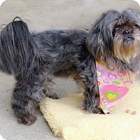 Adopt A Pet :: Sophia 12 tiny cute pounds - Sacramento, CA