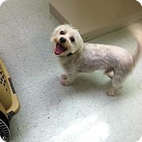 Adopt A Pet :: Floyd - Fair Oaks Ranch, TX