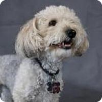 Adopt A Pet :: Bobby - Mount Gretna, PA