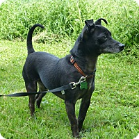 Adopt A Pet :: Chase - Wyanet, IL
