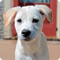 Adopt A Pet :: Kate (ETAA) - Brattleboro, VT