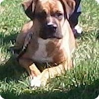 Adopt A Pet :: Sophie - Piqua, OH