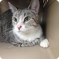 Adopt A Pet :: Mama Cass - St. Louis, MO