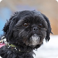 Adopt A Pet :: RUGBY - Ile-Perrot, QC