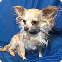 Adopt A Pet :: Lilly - San Leandro, CA