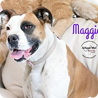 Adopt A Pet :: Maggie - Canyon Country, CA