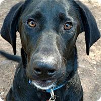 Adopt A Pet :: Brian - Coldwater, MI