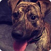 Adopt A Pet :: Rueger - Charlotte, NC
