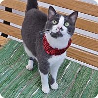 Adopt A Pet :: Kendall - Chambersburg, PA