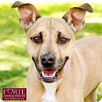 Adopt A Pet :: Xena - Marina del Rey, CA