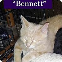 Adopt A Pet :: Bennet - Irwin, PA