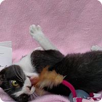 Adopt A Pet :: Mittens - Yuba City, CA