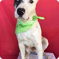 Adopt A Pet :: PETER - pasadena, CA
