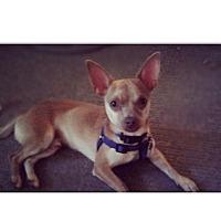 Adopt A Pet :: Tyson - Thousand Oaks, CA