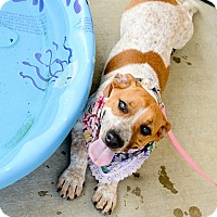 Adopt A Pet :: Maddie Rosalie - Muldrow, OK