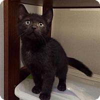 Adopt A Pet :: Scottie - Thornhill, ON