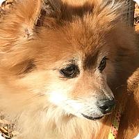 Adopt A Pet :: Jackson - Boulder, CO