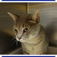 Adopt A Pet :: RASCAL - Marietta, GA
