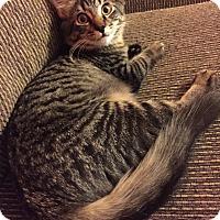 Adopt A Pet :: Huffy - Sugar Land, TX