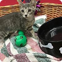 Adopt A Pet :: Holly - Decatur, AL