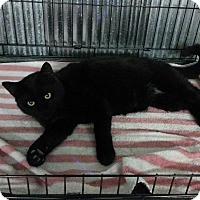 Adopt A Pet :: Harry - Montgomery City, MO